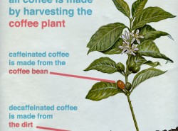 The difference between regular and decaf coffee