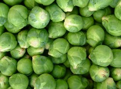 Brussels_sproutsR